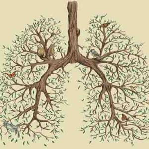 Препараты для лечения легких и верхних дыхательных путей